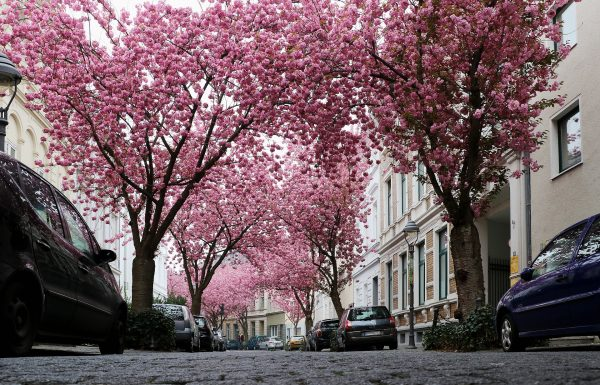 Städtetripp in Bonn